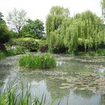 Water lilies at Claude Monet's home