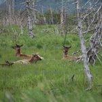 Big Game Alaska Foto