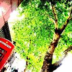 [OutsideTheBritishMuseum] -PhoneBox&GreenTree-