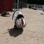 Sedgwick County Zoo ภาพถ่าย
