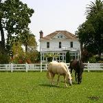 Grazing horses in front of Nickel & Nickel