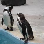ペンギンのまんまタイムは本当に可愛い!