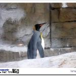 Taipei Zoo ภาพถ่าย