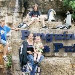St. Louis Zoo ภาพถ่าย