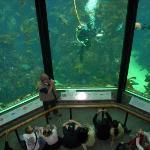 Diver feeding the fish