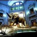 The best museum in DC
