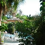 View our to pool through palm trees