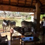 Taking an afternoon break after the morning game drive.