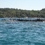 colonia di gabbiani, su un'isoletta nel mare tra rovigno e l'isola rossa