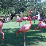 flamingo @ busch gardens tampa