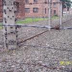 Barbed wire fence found at Auschwitz