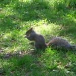 Chipmunk or Squirrel????....