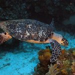 Dive Africa Photo