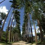Jadim Botanico. The main road in the borough is the Rua Jardim Botanico (Jardim Botanico Street