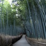 竹林嵯峨野, 京都Bamboo Forest @ Sagano, Kyōto