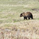 1 of 3 grizzlies we saw