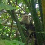 Monos en la Reserva