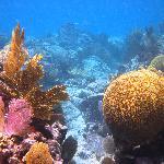 Coral Reef at Sapphire Beach