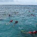 Caribbean Festival - Snorkeling in beautiful coral reefs
