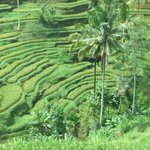 Tegalalang Rice Terrace Photo