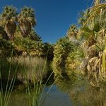 Foto de Coachella Valley Preserve