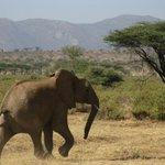 Elephant Watch Camp & Safaris