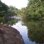 近くの泳げる川