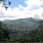 The El Yunque Rain Forest