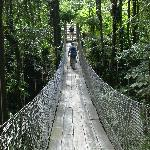 The hanging bridge en route to the Smithsonian rooms, pool, hot tub, and waterfall