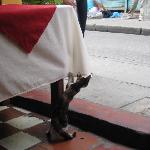 Resident kitty!
