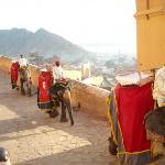 Promenade à dos d'éléphant pour monter au fort Amber
