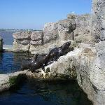 Seals in Bremerhaven Zoo