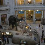 Inside view of Natural History Museum