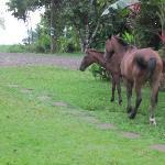 se nos colaron unos caballos en el jardín delantero