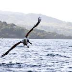 This fabulous bird, the Fish Eagle can be seen on the shore of Lake Malawi