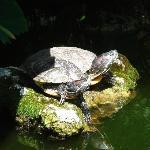 Schildkrötenteich