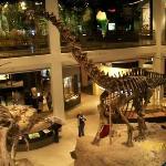 Musée d'histoire naturelle de Houston
