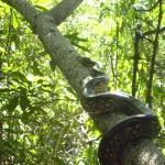 Lokobe Nature Special Reserve Photo