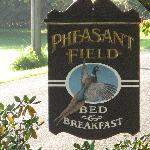 Pleasant Pheasant Field