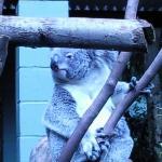 Australia Zoo ภาพถ่าย