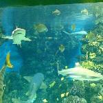 acquario con 5 pescecani...