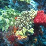 Soft Coral Scuba Dive