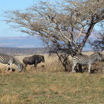 Nambiti Game Conservancy
