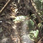 spider web spotted midway through the bush walk