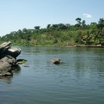 On a small island right at the mouth of the Nile, where lake Victoria goes into the Victoria Nil