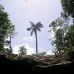 Trees outside the cenote.  Notice the thin rock layer in these parts of Yucatan.  Cenotes are ac