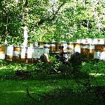 BEE Farm at Ely's Mill (local honey sales)