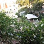 la bonne odeur du jasmin sur le balcon
