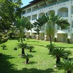jardin con palmeiras leque