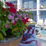 nice flowers on pool deck